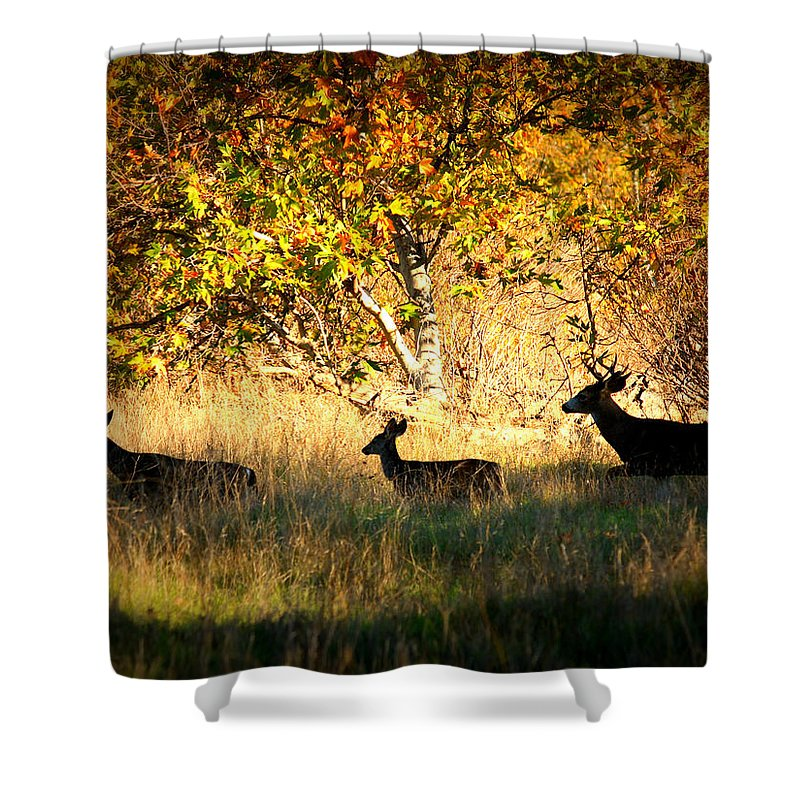 Landscape Shower Curtain featuring the photograph Deer Family In Sycamore Park by Carol Groenen