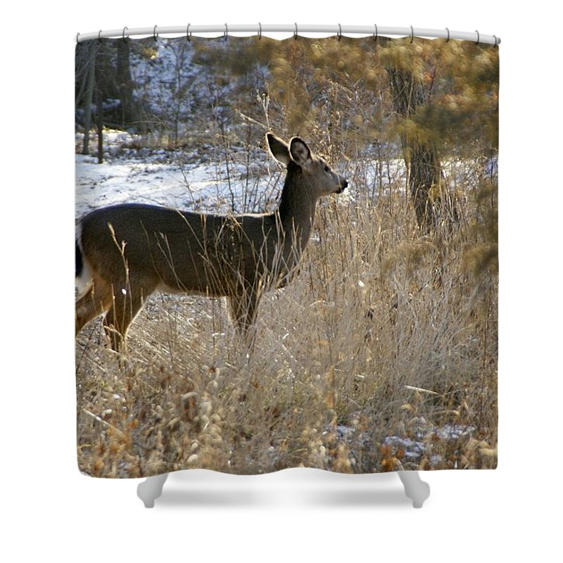 Deer Shower Curtain featuring the photograph Deer in Morning light by Toni Berry
