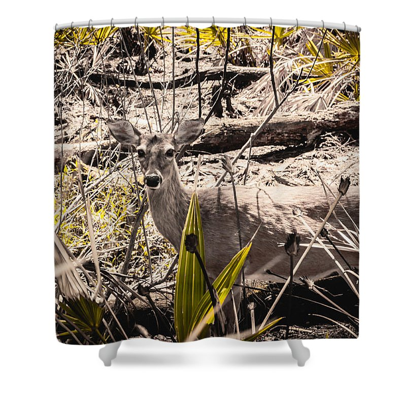 Mammal Shower Curtain featuring the photograph Deer In The Wood by Debra Forand