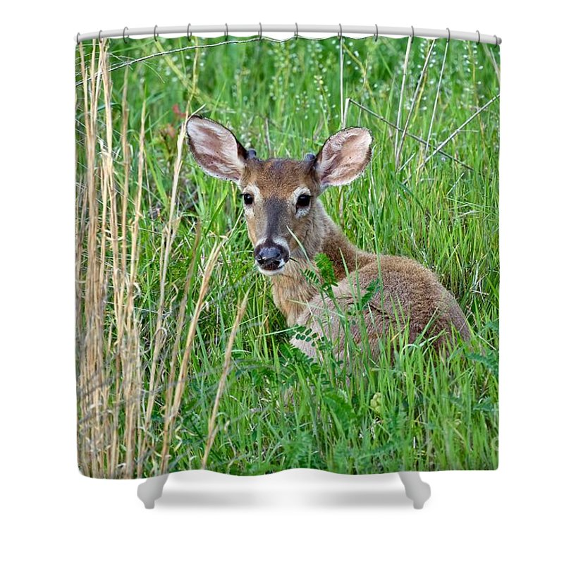 Animal Shower Curtain featuring the photograph Deer Laying In Grass by Jeramey Lende