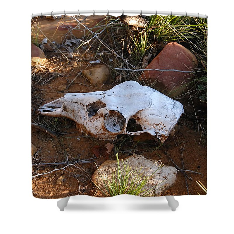 Skull Shower Curtain featuring the photograph Deer Spirit Mesa by David Lee Thompson