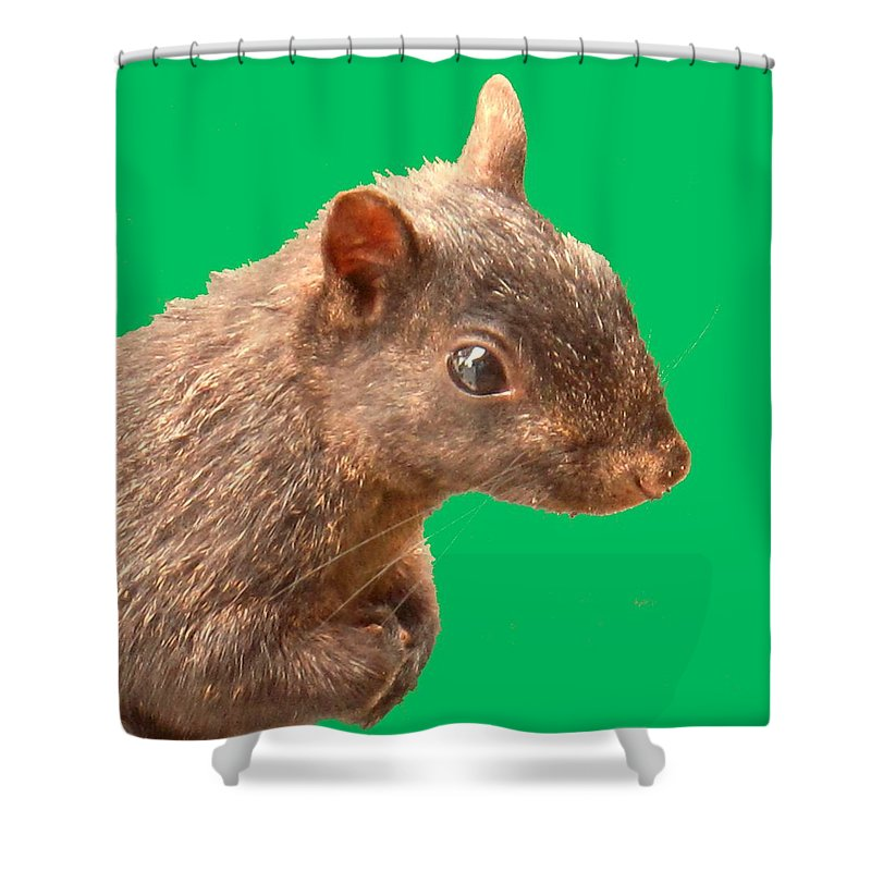 Squirrel Shower Curtain featuring the photograph Definately Bright Eyed by Ian MacDonald