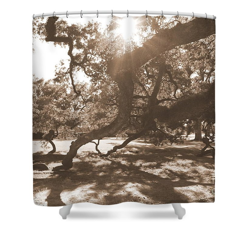 Sepia Shower Curtain featuring the photograph Defying Gravity In Sepia by Carol Groenen