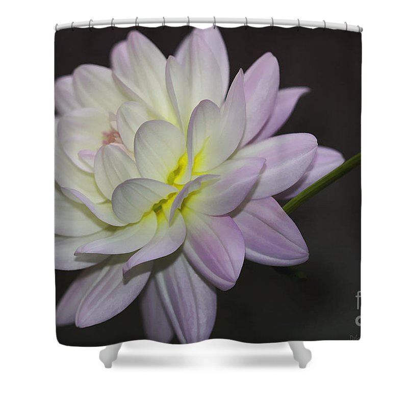 Flower Shower Curtain featuring the photograph Delicate Dahlia Balance by Deborah Benoit