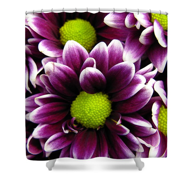 Purple Shower Curtain featuring the photograph Delicate Purple by Rhonda Barrett