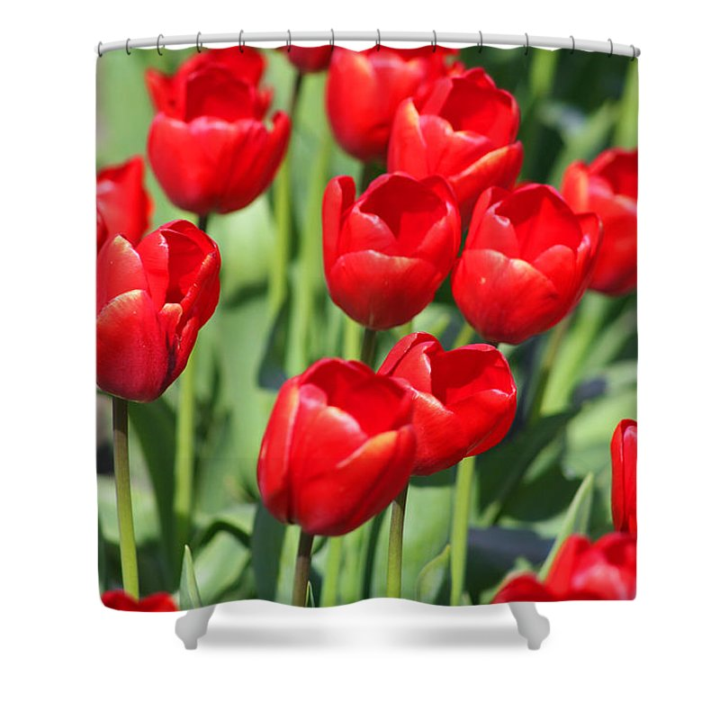 Red Tulips Shower Curtain featuring the photograph Delicious Tulips by Mary Gaines