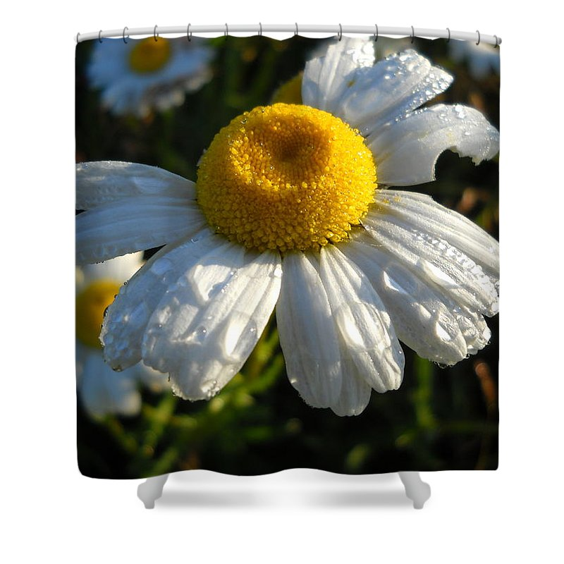 Close Up Shower Curtain featuring the photograph Delightful Dew Drops by Kent Lorentzen