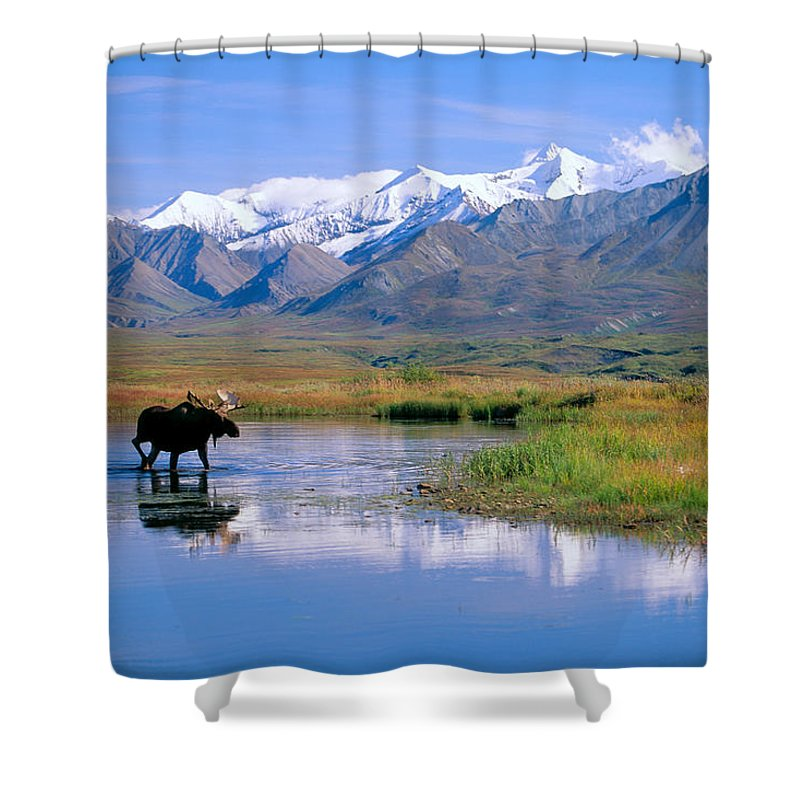 Animal Art Shower Curtain featuring the photograph Denali National Park by John Hyde - Printscapes