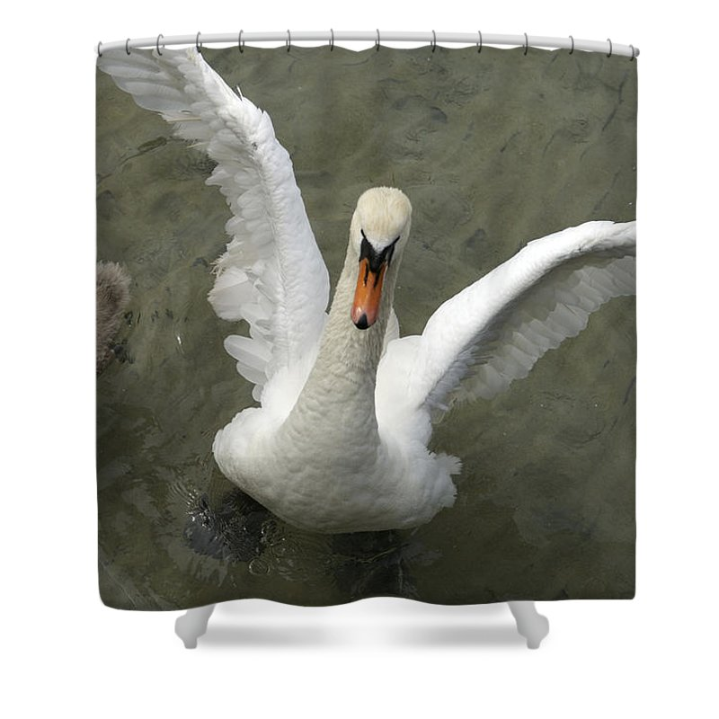 Nobody Shower Curtain featuring the photograph Denmark, Copenhagen Swan Flaps Her Wing by Keenpress