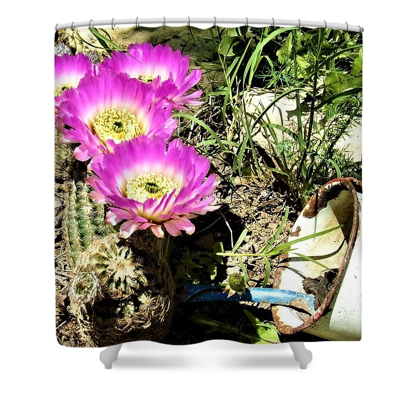 Cactus Shower Curtain featuring the photograph Desert Blossom by Michael Dillon