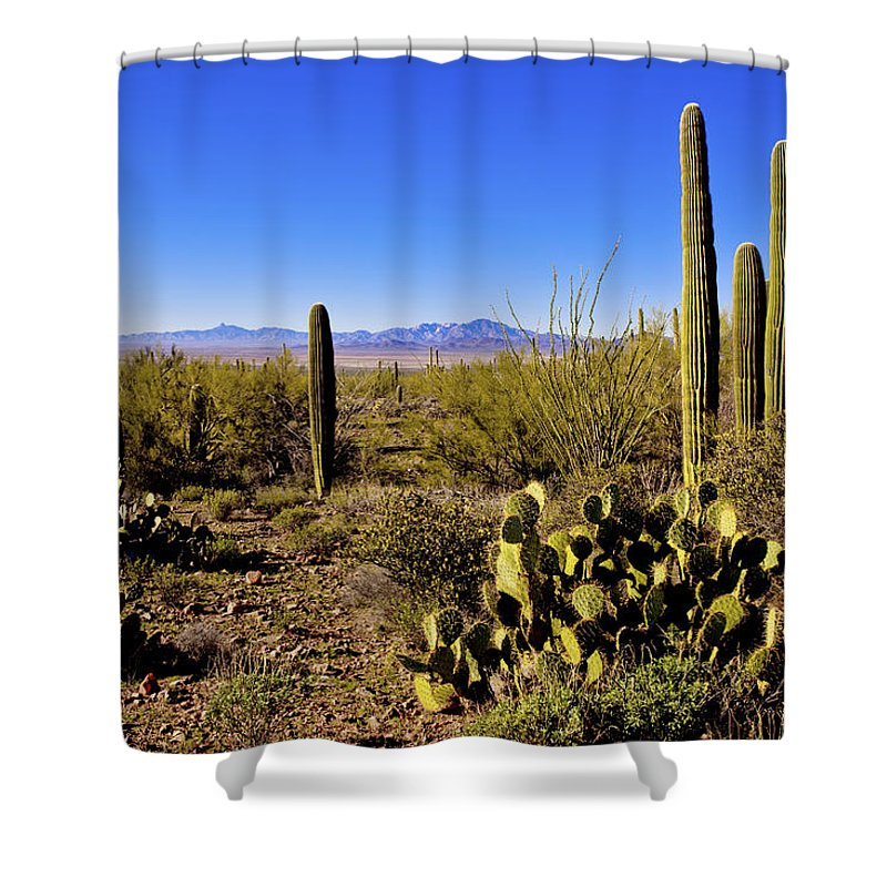 Desert Spring Shower Curtain featuring the photograph Desert Spring by Chad Dutson