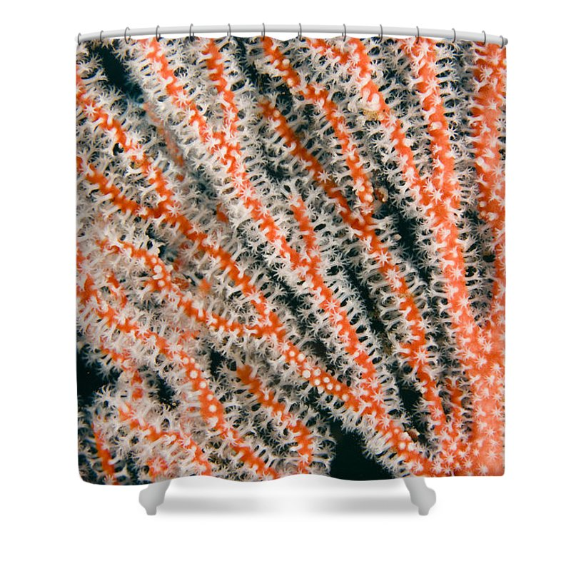 Abstract Shower Curtain featuring the photograph Detail Of Sea Fan, Or Gorgonian Coral by Tim Laman