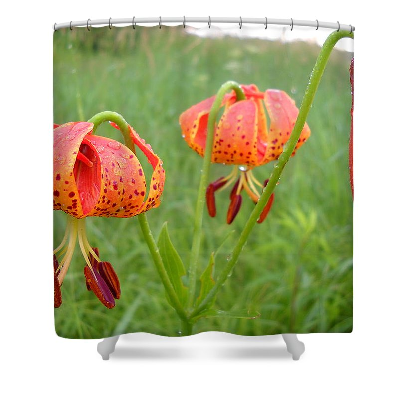 Dew Shower Curtain featuring the photograph Dew Covered Tiger Lilies by Kent Lorentzen
