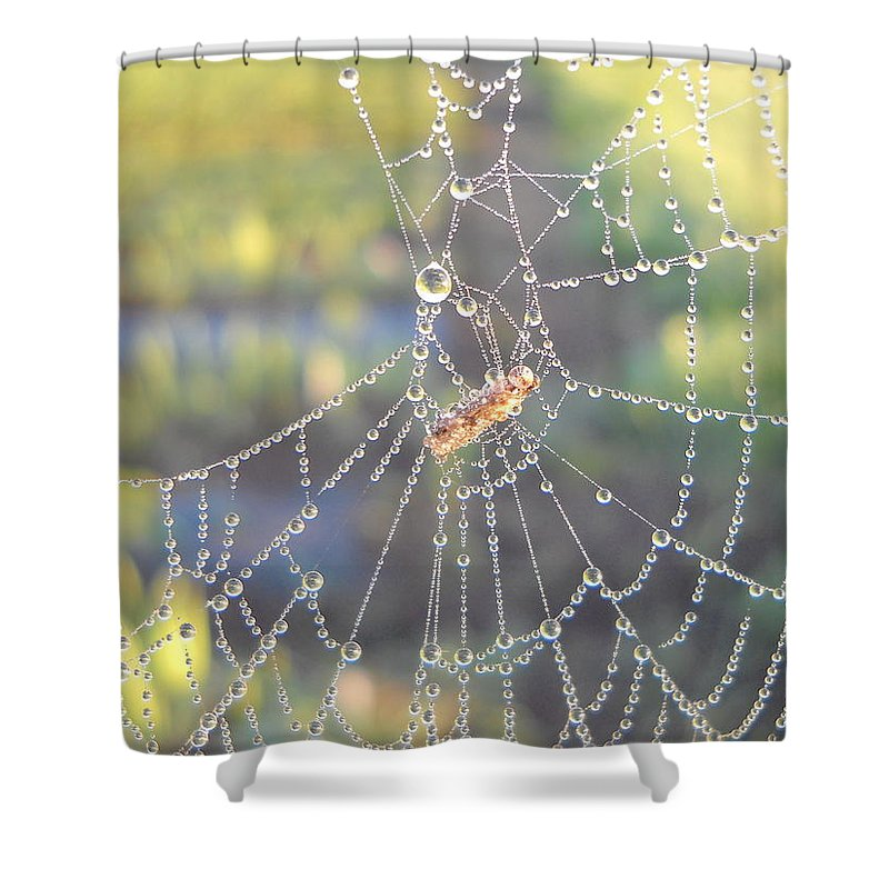 Morning Dew Shower Curtain featuring the photograph Dew Drops On A Spider Web by Kent Lorentzen