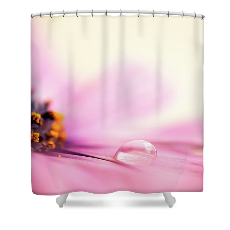 Daisy Shower Curtain featuring the photograph Dew On A Daisy by Delphimages Photo Creations