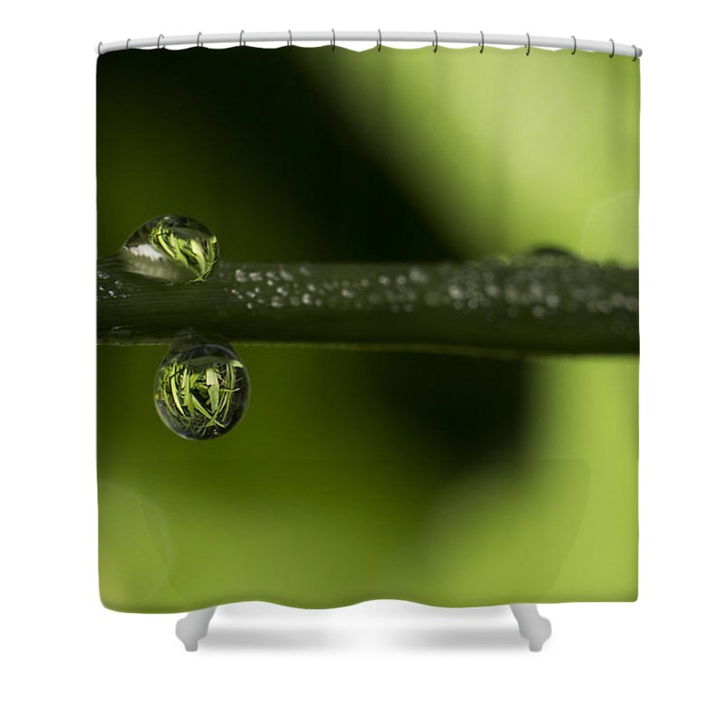Water Droplet Shower Curtain featuring the photograph Dews Of Life by Raymund Tan