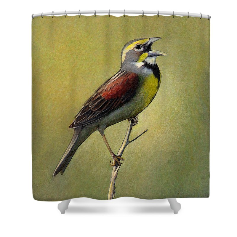 Birds Shower Curtain featuring the drawing Dickcissel Summer Song by Bruce Morrison