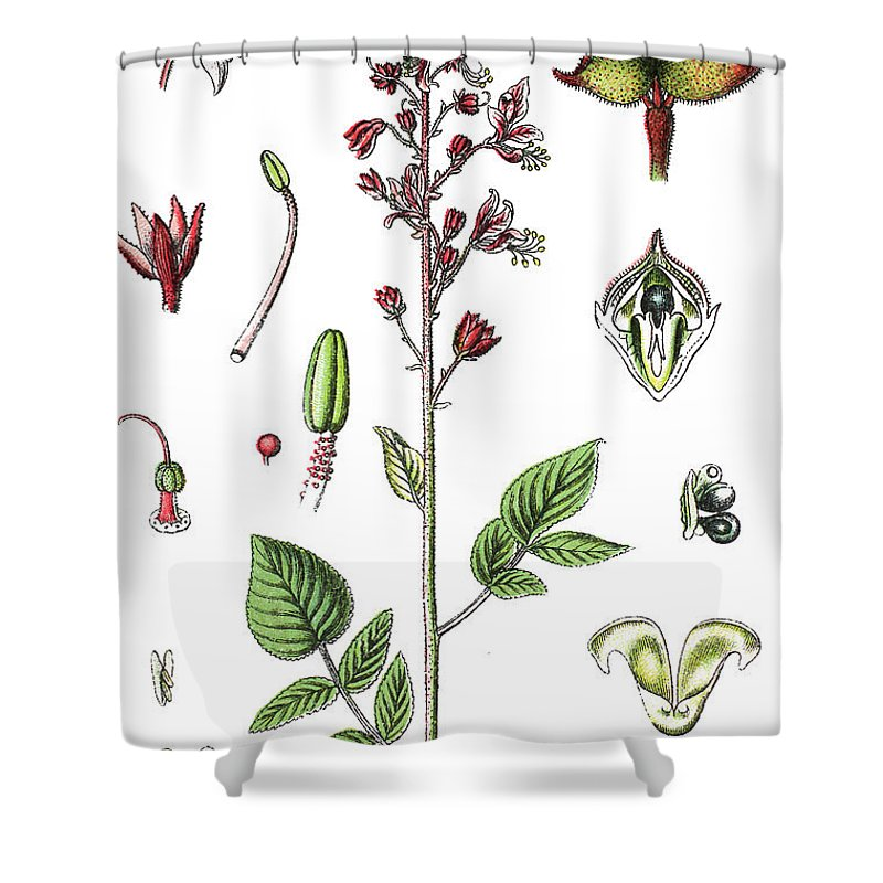 Dictamnus Albus Shower Curtain Featuring The Drawing Burning Bush False Dittany
