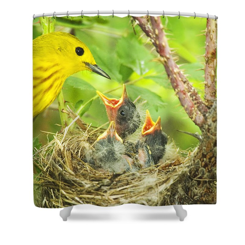 Yellow Warbler Shower Curtain featuring the photograph Dinner At The Warblers by Gary Beeler