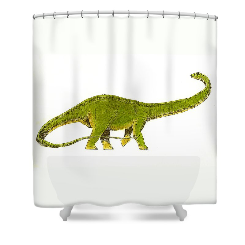 Animals Shower Curtain featuring the painting Diplodocus by Michael Vigliotti