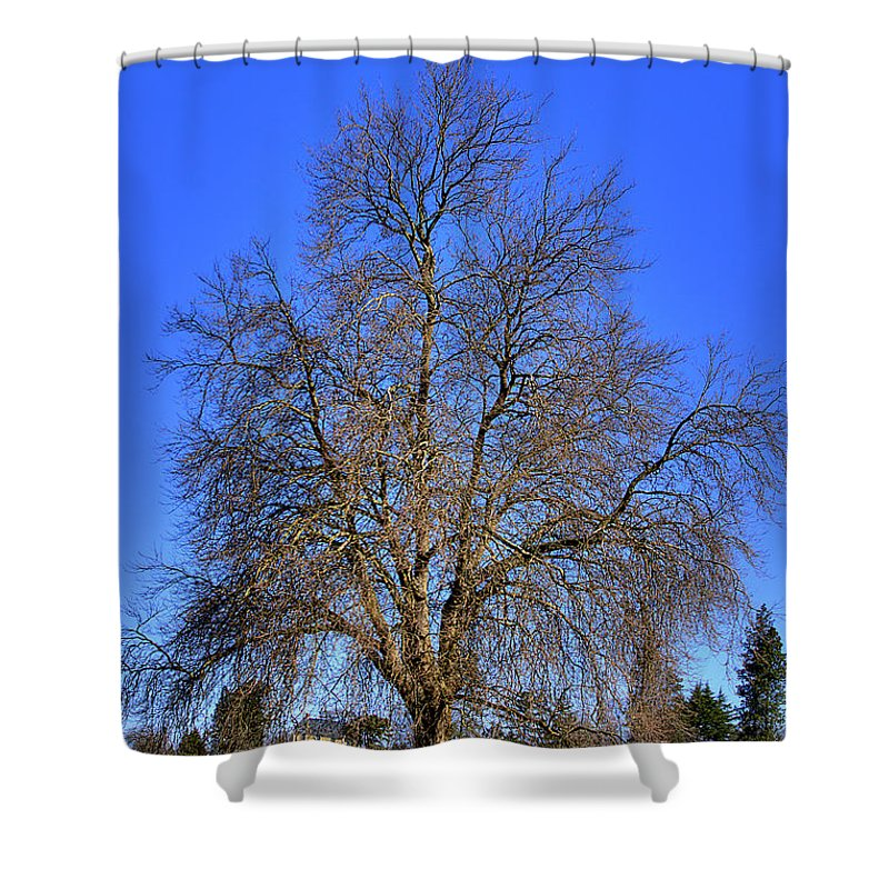 Photo Shower Curtain featuring the photograph Discovery Park No.4 by David Patterson