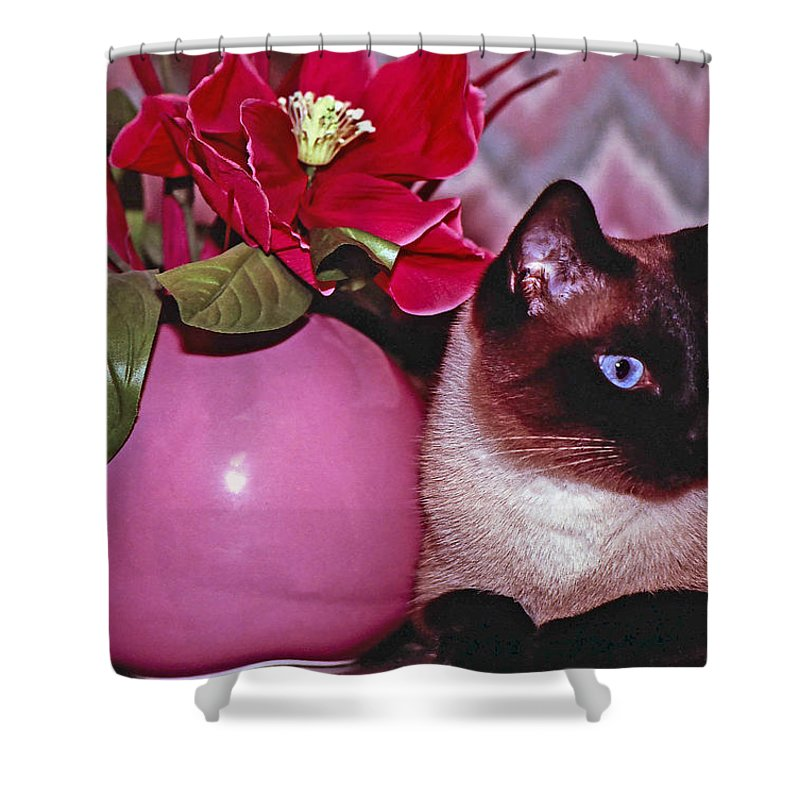 Cat Shower Curtain featuring the photograph Disney by Gary Adkins