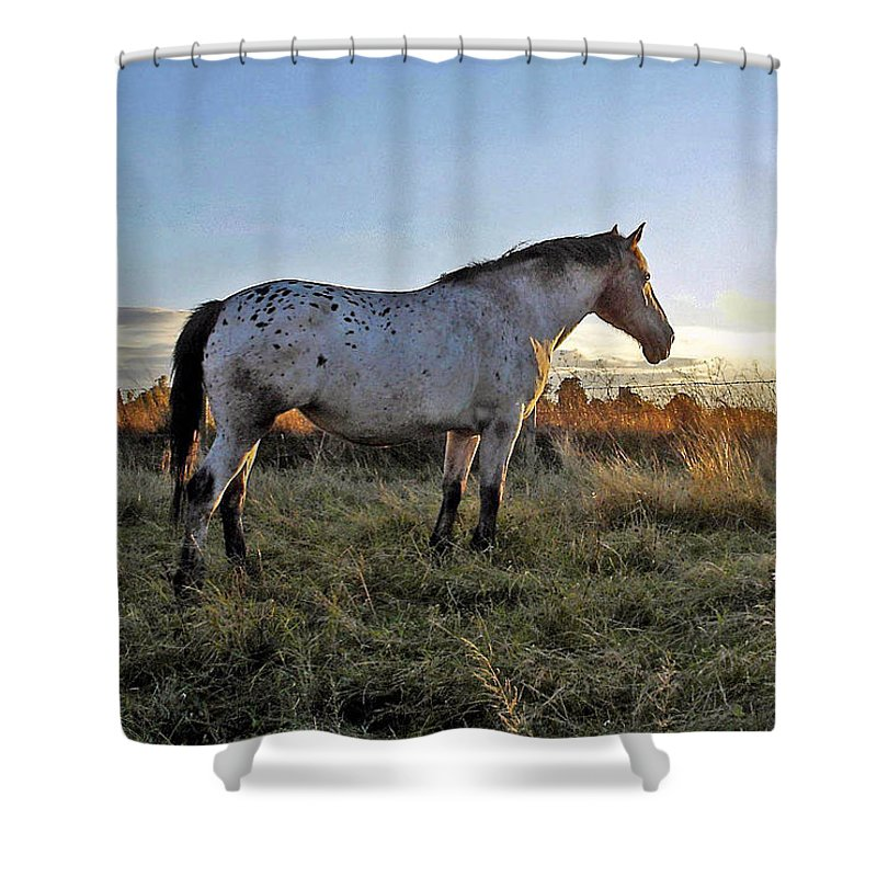 Appaloosa Shower Curtain featuring the photograph Distant thoughts by Susan Baker