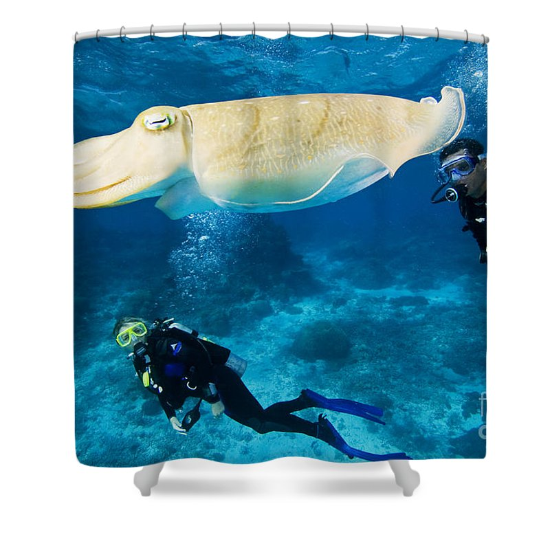 Adventure Shower Curtain featuring the photograph Divers Swim Near A Cuttlefish by Dave Fleetham - Printscapes