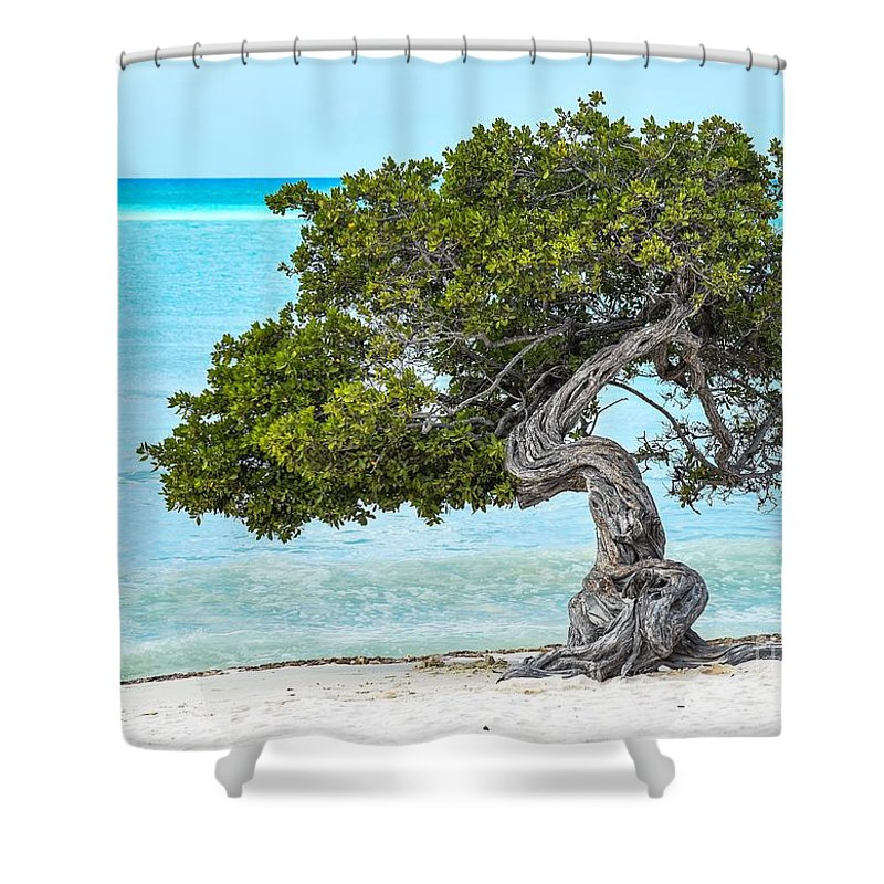 Tree Shower Curtain featuring the photograph Divi-divi Aruba by Janal Koenig