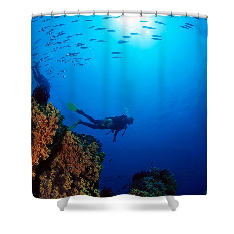 Bubble Shower Curtain featuring the photograph Diving Scene by Ed Robinson - Printscapes