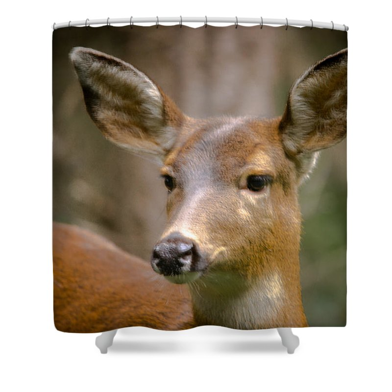 Doe Shower Curtain featuring the photograph Doe With A Blaze by Penny Miller