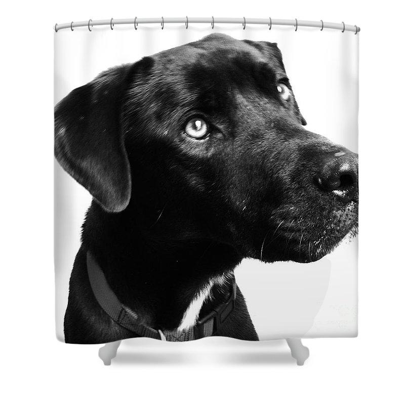 Dogs Shower Curtain featuring the photograph Dog by Amanda Barcon