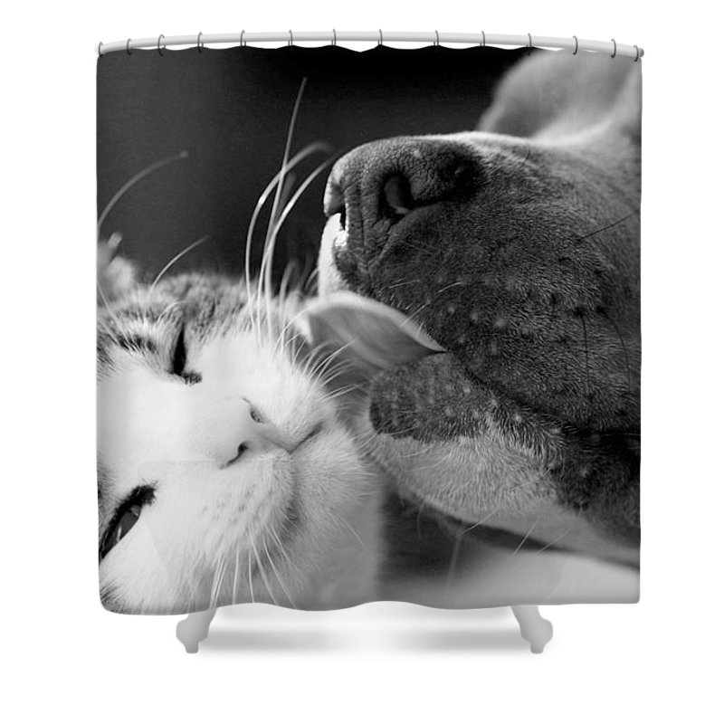 Dog Shower Curtain Featuring The Photograph And Cat By Sumit Mehndiratta