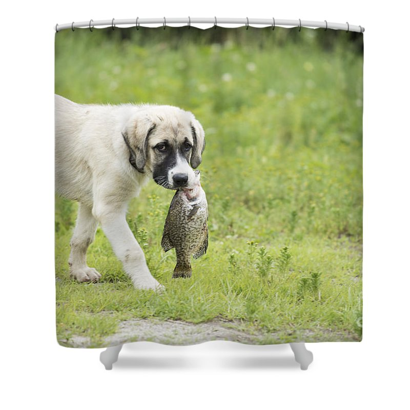 Fish Shower Curtain featuring the photograph Dog Gone Fishing by Juli Scalzi