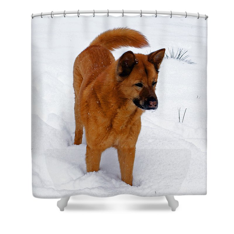 Snow Shower Curtain featuring the photograph Dog Days Of Winter by Jean Haynes