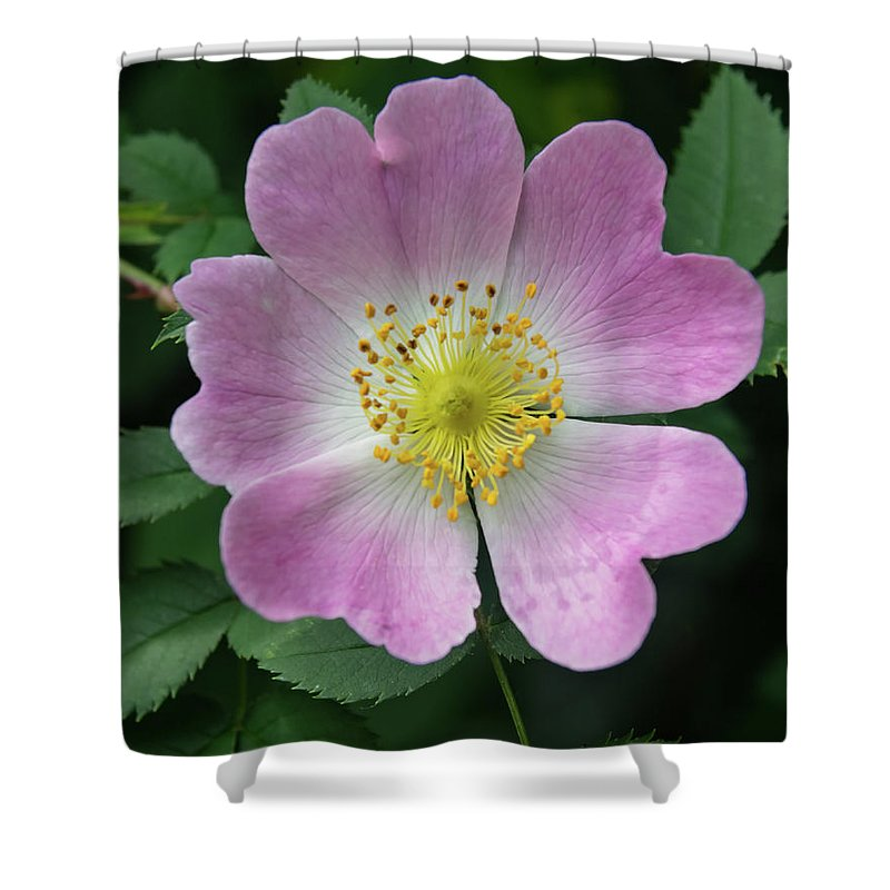 Dog Rose Shower Curtain featuring the pyrography Dog Rose by Warren Bourne