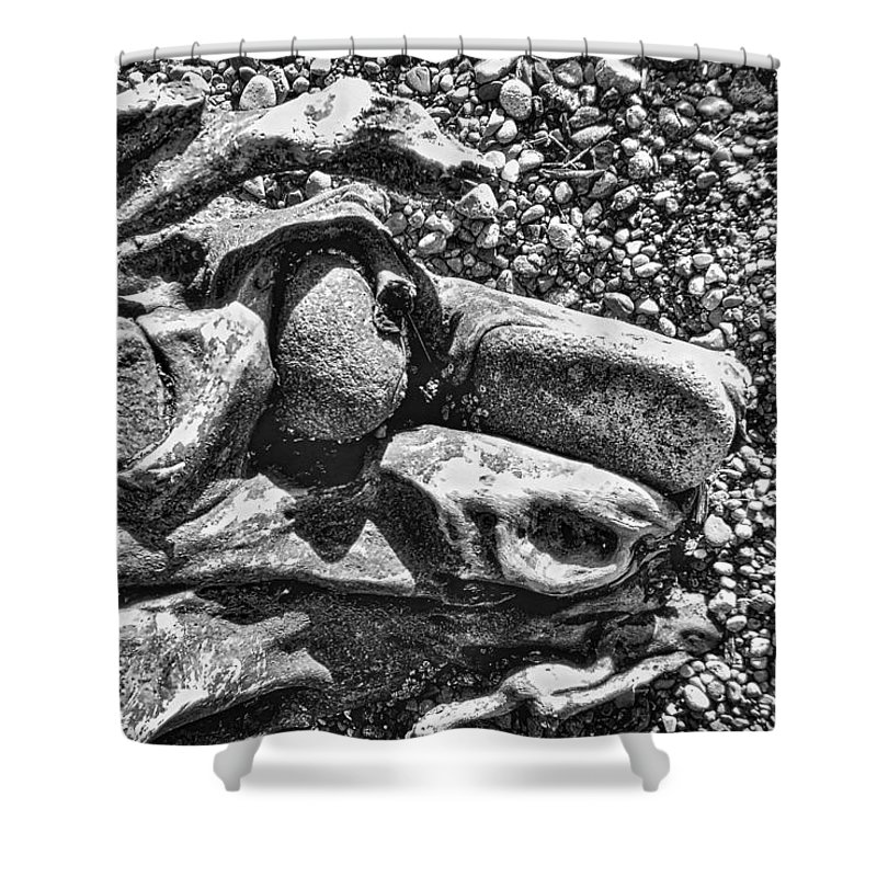 B&w Shower Curtain featuring the photograph Dog Tired by David Coleman