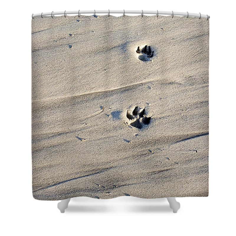 Beach Shower Curtain featuring the photograph Dog Tracks In The Sand At Carmel Beach by Charles Kogod