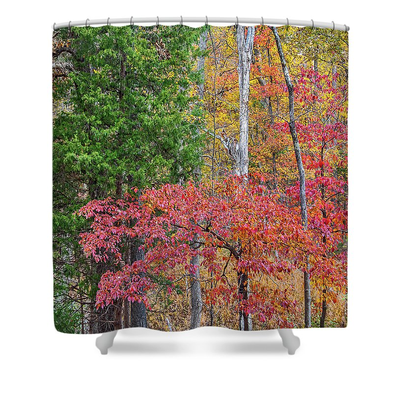 Vertical Shower Curtain featuring the photograph Dogwood And Cedar by Tim Fitzharris