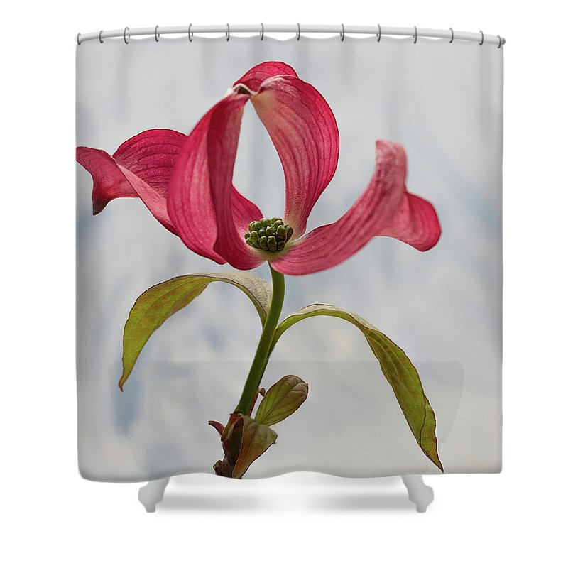 Floral Shower Curtain featuring the photograph Dogwood Ballet 5 by Shirley Mitchell