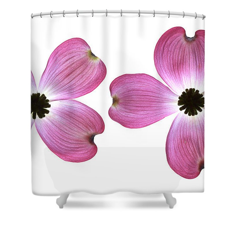 Genus Cornus Shower Curtain featuring the photograph Dogwood Flowers by Tony Cordoza