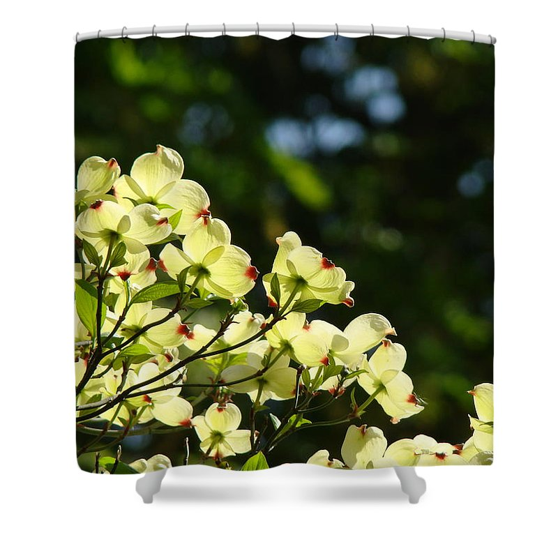 Dogwood Shower Curtain featuring the photograph Dogwood Flowers White Dogwood Tree Flowers Art Prints Cards Baslee Troutman by Baslee Troutman