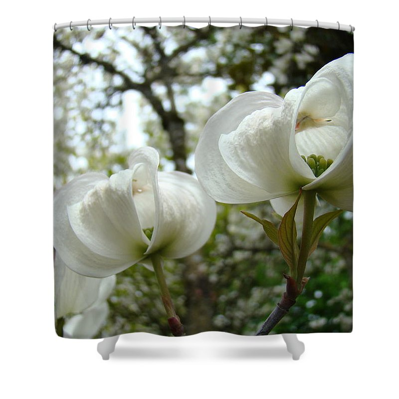 Dogwood Shower Curtain featuring the photograph Dogwood Flowers White Dogwood Trees Blossoming 8 Art Prints Baslee Troutman by Baslee Troutman