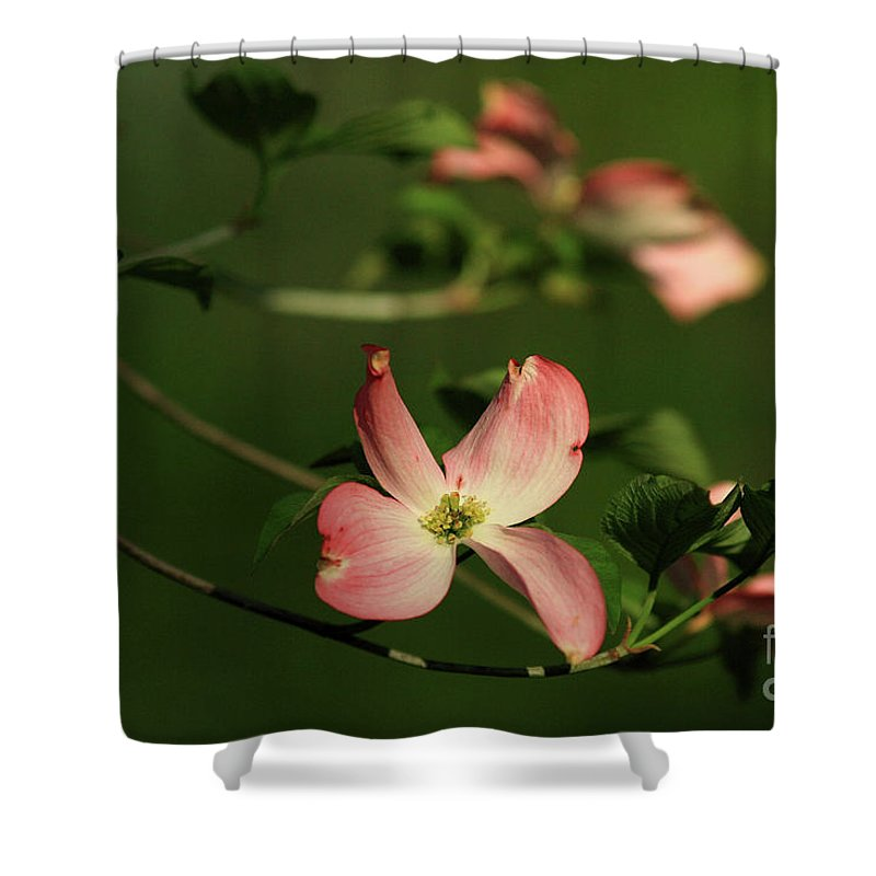 Dogwood Shower Curtain featuring the photograph Dogwood In Pink by Douglas Stucky