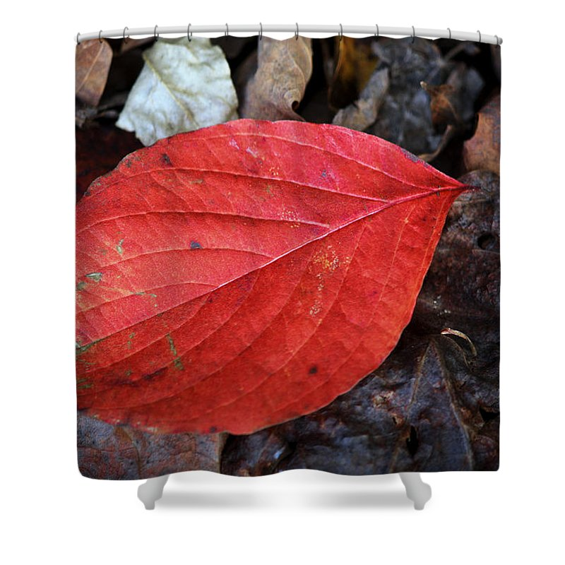 Dogwood Shower Curtain featuring the photograph Dogwood Leaf by Teresa Mucha