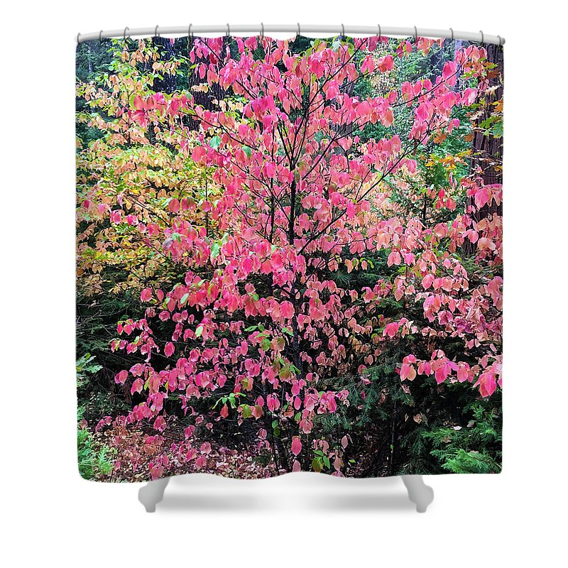 Dogwood Shower Curtain featuring the photograph Sierra Dogwood by Michael Allred