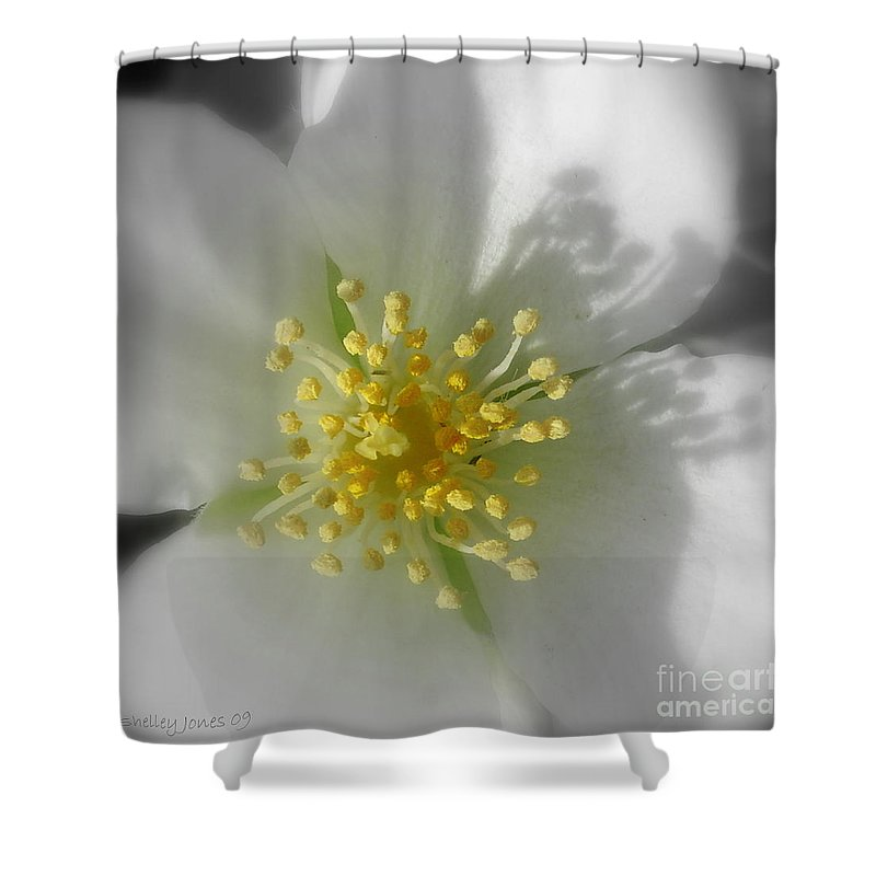Photography Shower Curtain featuring the photograph Dogwood by Shelley Jones
