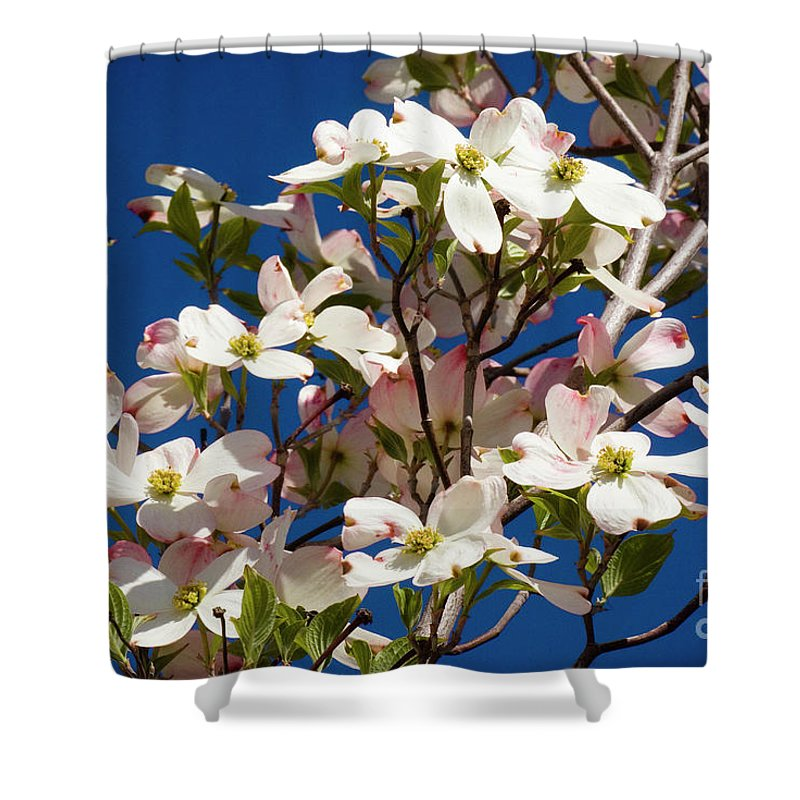 Dogwood Shower Curtain featuring the photograph Dogwood Sky by Jim And Emily Bush