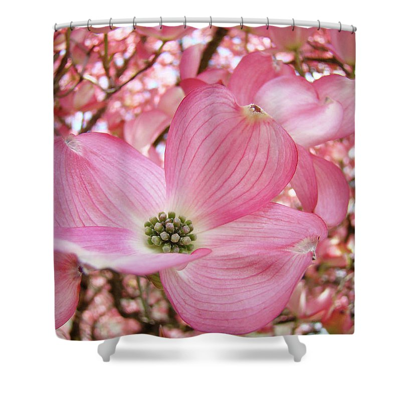 Dogwood Shower Curtain featuring the photograph Dogwood Tree 1 Pink Dogwood Flowers Artwork Art Prints Canvas Framed Cards by Baslee Troutman