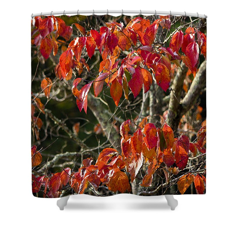 Dogwood Shower Curtain featuring the photograph Dogwood Tree by Teresa Mucha